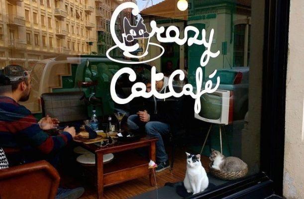 Una tazza di tè al Crazy Cat Cafè