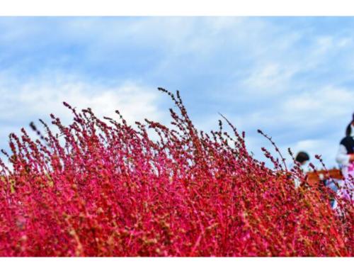 I colori del Giappone,mostra fotografica di Fabio Accorrà