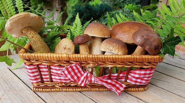 5 ricette facili e veloci con i funghi