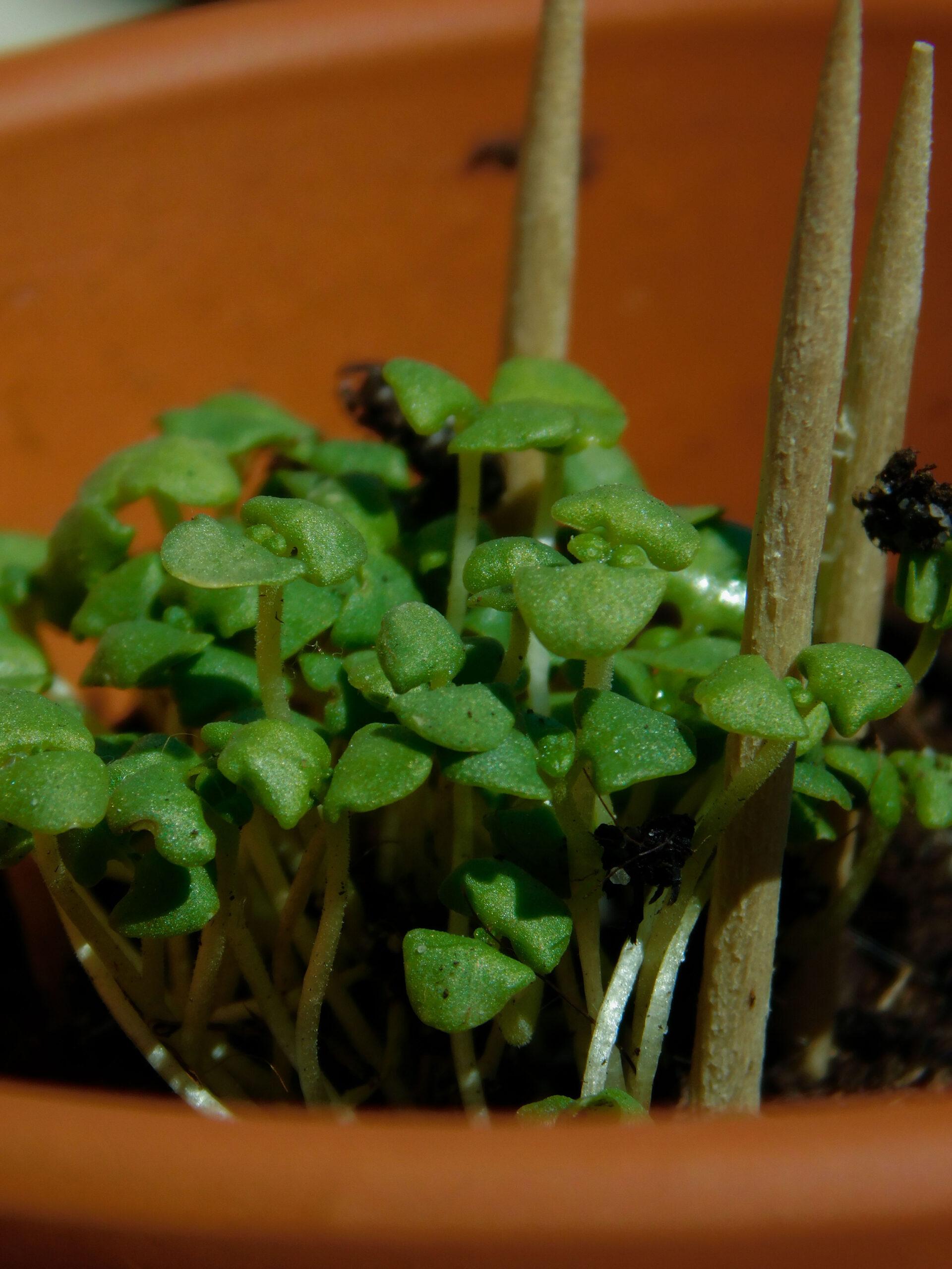 6 piante aromatiche